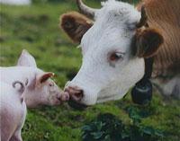 Parttime vegetarisch eten als Flexitariër