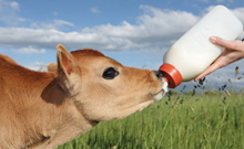 melk ongezond